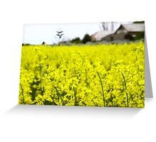 Canola season Greeting Card