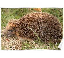 Miss Tiggywinkle comes to Lunch! Poster