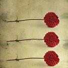 Three by Priska Wettstein