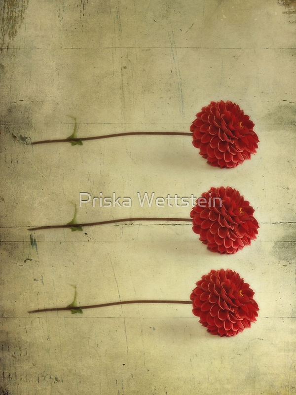 Three by Priska Wettstein