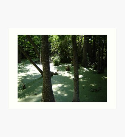 Silver Swamp Art Print