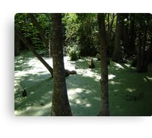 Silver Swamp Canvas Print