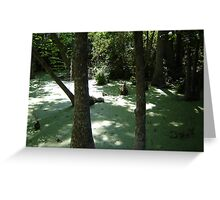 Silver Swamp Greeting Card