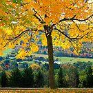 Fall Colors In PA. by Deborah  Benoit
