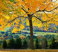 Fall Colors In PA. by Deborah  Benoit