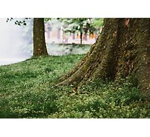 Tree Trunks in Spring Photographic Print