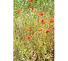 Red Poppies and Wild Flowers Photographic Print