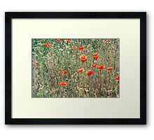Red Poppies In A Summer Sun Framed Print