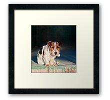 Scruffy Little Dog Framed Print