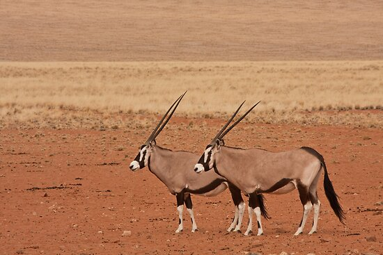 Oryx paired in profile by Owed To Nature