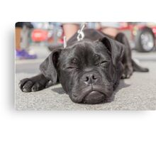 The tired puppy Canvas Print