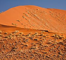 Red curve of dune by Owed to Nature