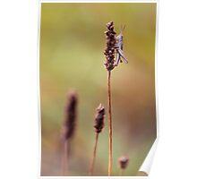 United Colours of Grasshopper Poster