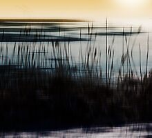 Golden morning  by Christian Hartmann