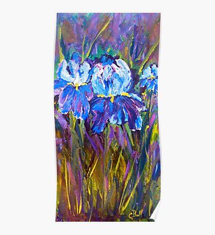 Iris Flower Garden Poster