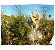 Milkweed Wonder in Muskoka Poster
