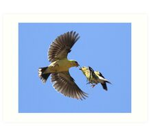 American Goldfinch Exchange Art Print