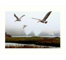 Three Pelicans Art Print