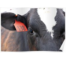 Cow 138 Poster