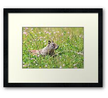 Groundhog in the Meadow Framed Print