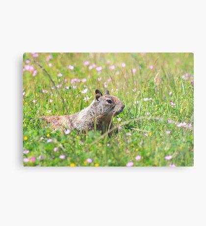Groundhog in the Meadow Metal Print