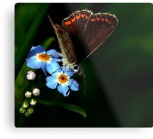 Brown Argus Metal Print