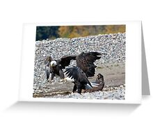 Eagle Family Squabble Greeting Card
