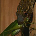 Gecko Dinner  by naturalnomad