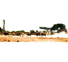 Stampede!  Photographic Print