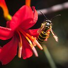 Getting the Nectar by WillBov