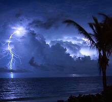 Lightning and Palm Trees by Scott Boileau