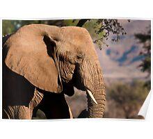 Desert elephant profile Poster