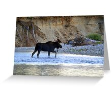 Young bull moose in the Bitterroot River Greeting Card