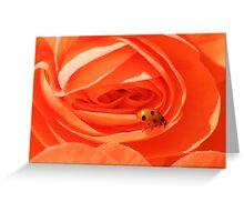 Ladybird on begonia Greeting Card