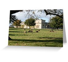 More Deer, and The Stable Block Greeting Card
