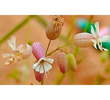 Anatomy of a Wildflower Photographic Print