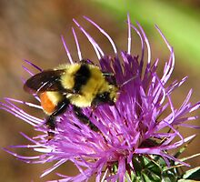 Thistle Bee by Jeralynn