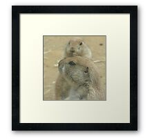Prairie Dogs at Play Framed Print