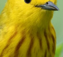 Yellow Warbler Sticker