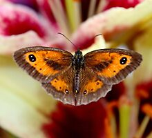GateKeeper on Lilies by AnnDixon