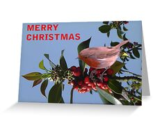 Christmas Reds Greeting Card