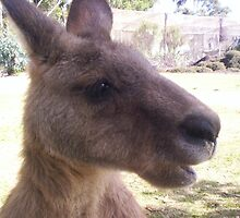 Mr Skippy, Bicheno, Tasmania by kimathy