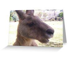 Mr Skippy, Bicheno, Tasmania Greeting Card
