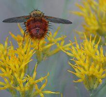 Un-Bee-Lievable by Arla M. Ruggles