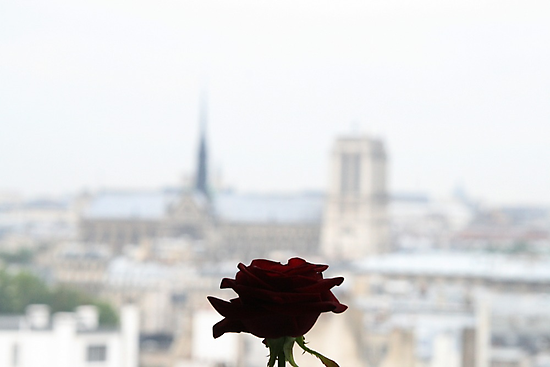 The rose of Paris by DKphotoart