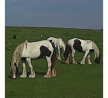 Shire Horses Photographic Print