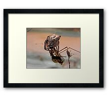 Catch of the day. Framed Print