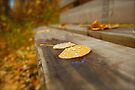 Raindrops and Leaves by Roxanne Persson