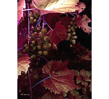 The Blood of the Grape Photographic Print