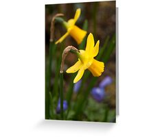 Early Spring Daffodils Greeting Card